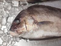 コロダイの島寿司38