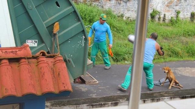 ブラジル ゴミ 犬