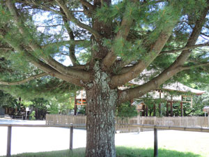 上賀茂神社blog08