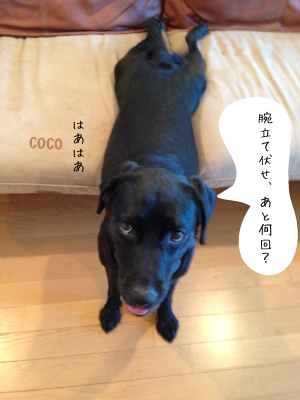 coco072901.png