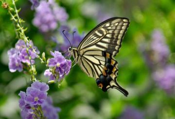 butterfly_convert_20150730191029.jpg