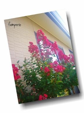PhototasticCollage-2015-07-26-16-09-59 (285x380)