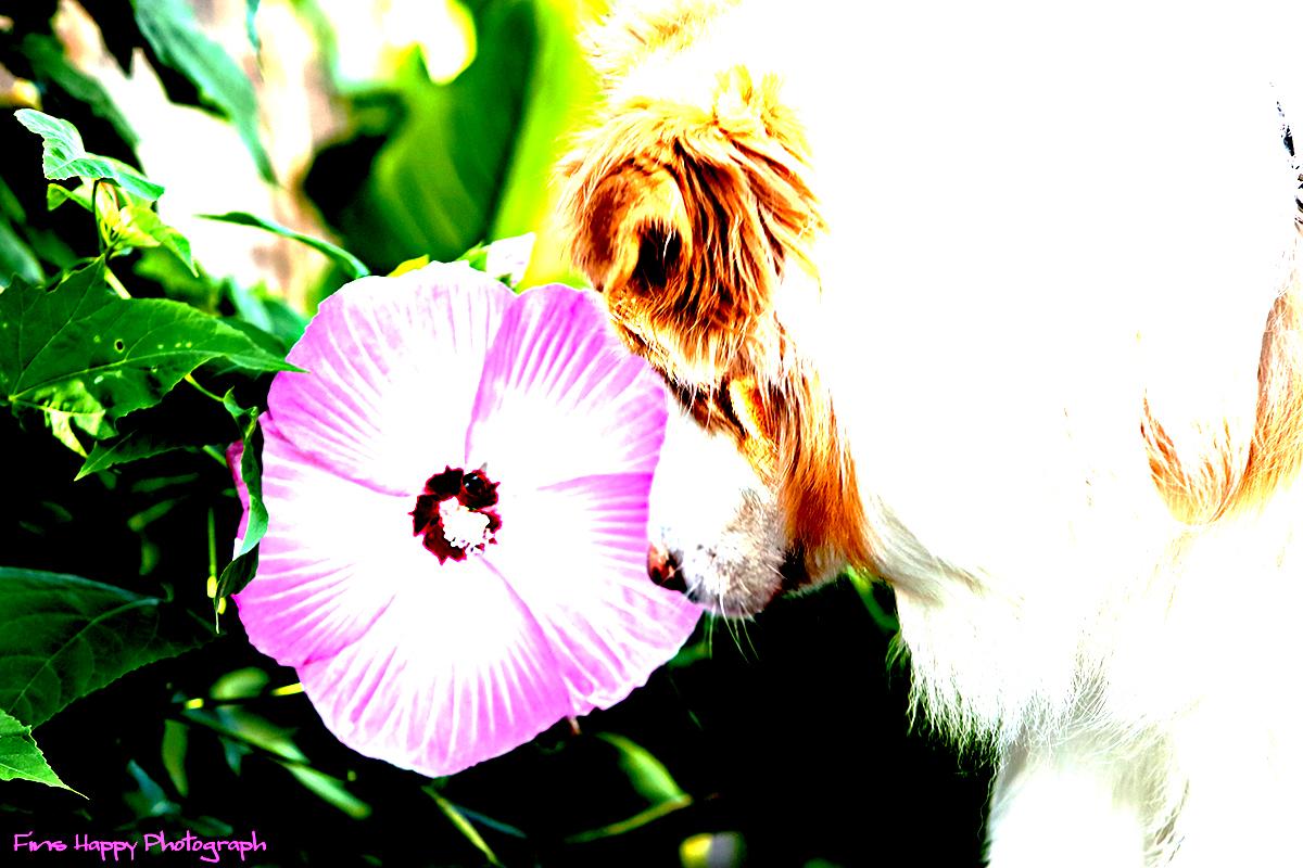 この花、僕の顔より大きいよ!