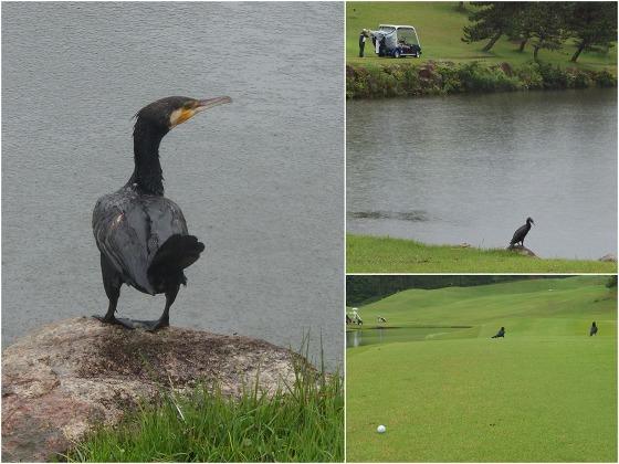 150707ゴルフ場の鳥