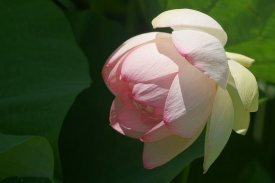 150714森川花はす田-9