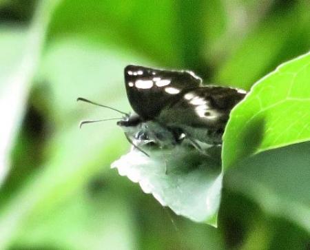 清水山の昆虫 090