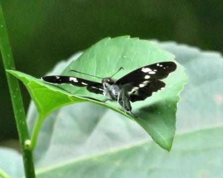 清水山の昆虫 089