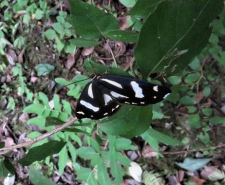 清水山の昆虫 060