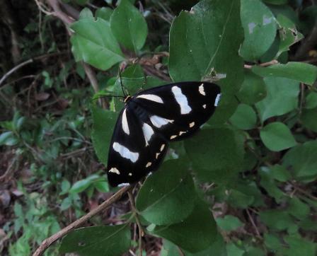 清水山の昆虫 056