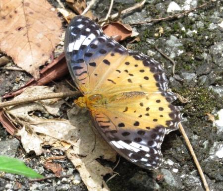 清水山の昆虫 099