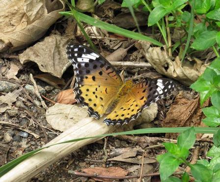 清水山の昆虫 096