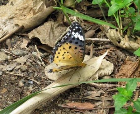 清水山の昆虫 093