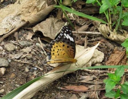 清水山の昆虫 095
