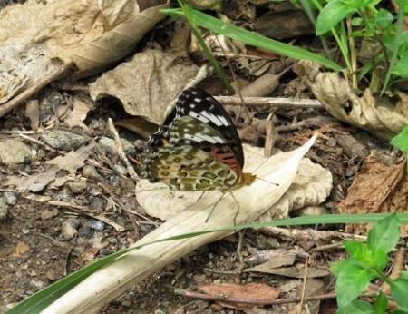 清水山の昆虫 094