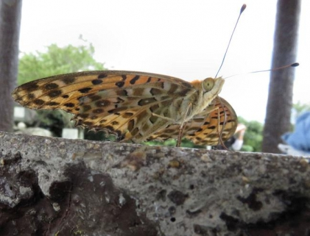 清水山の昆虫 031
