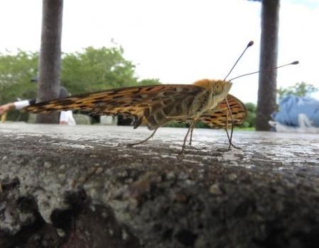 清水山の昆虫 026