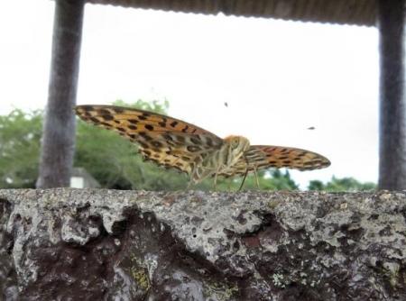 清水山の昆虫 024