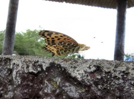 清水山の昆虫 022
