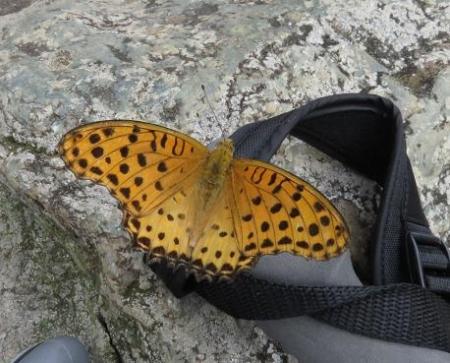 清水山の昆虫 039