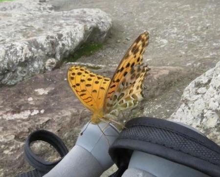 清水山の昆虫 041