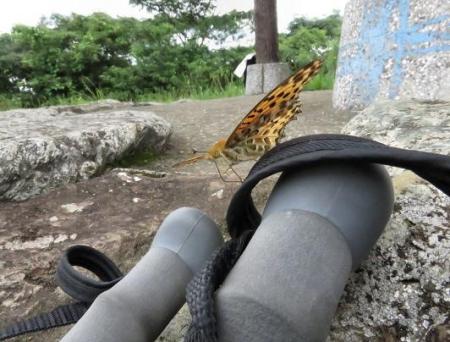 清水山の昆虫 045