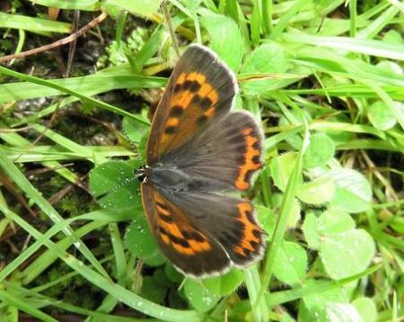 蝶の集団 048