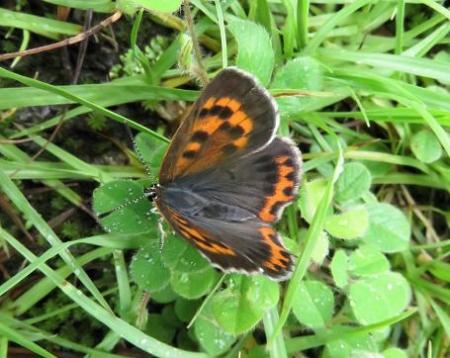 蝶の集団 046