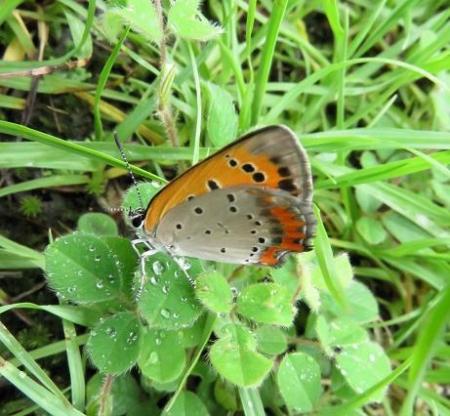 蝶の集団 044