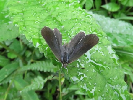 蝶の集団 069