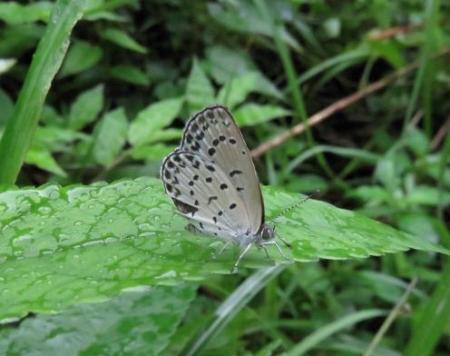 蝶の集団 067