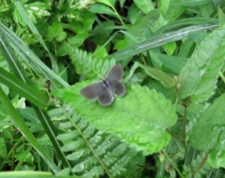 蝶の集団 063