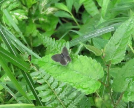 蝶の集団 058