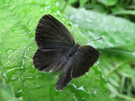 蝶の集団 071