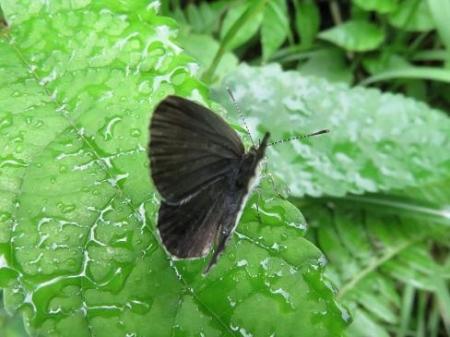 蝶の集団 072