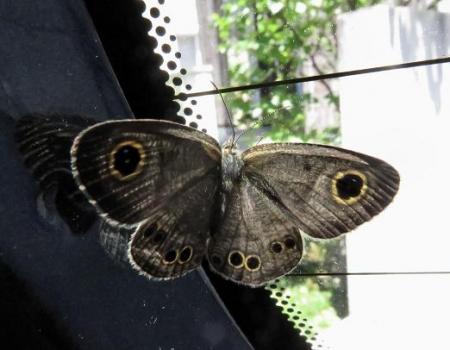 車に蝶が乗っていた 060
