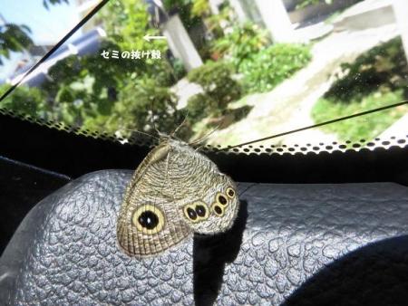 車に蝶が乗っていた 062