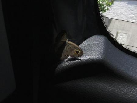 車に蝶が乗っていた 055