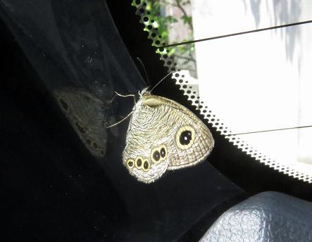 車に蝶が乗っていた 057