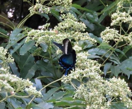 蝶の集団 120