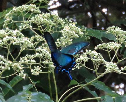 蝶の集団 121