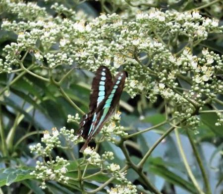 蝶の集団 125