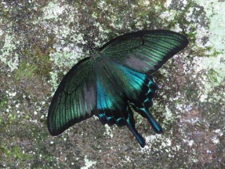 蝶の集団 105