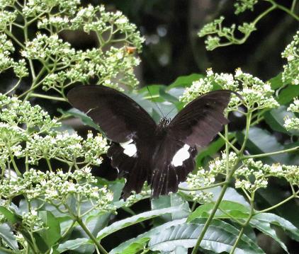 蝶の集団 165