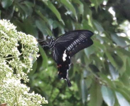 蝶の集団 151