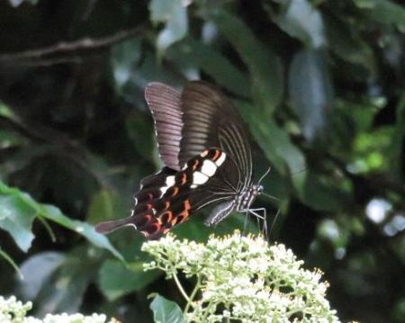 蝶の集団 143