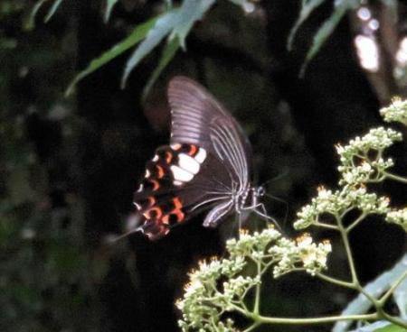 蝶の集団 129