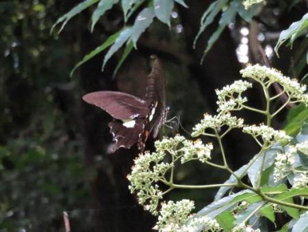 蝶の集団 141