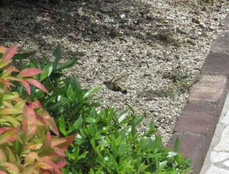 庭の昆虫 012