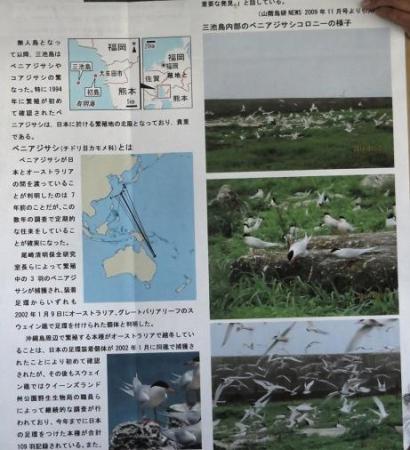 探鳥会人工島 090
