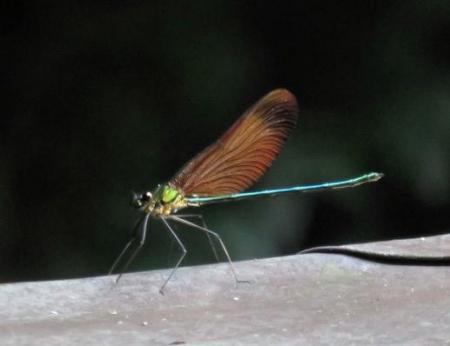 清水山の昆虫 115